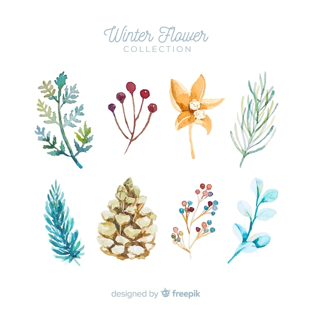 Winter bloemen collectie Gratis Vector