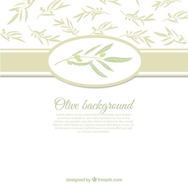Witte achtergrond met olijfbladeren Gratis Vector