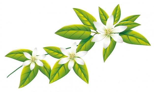 Witte bloemen op groene bladeren Gratis Vector