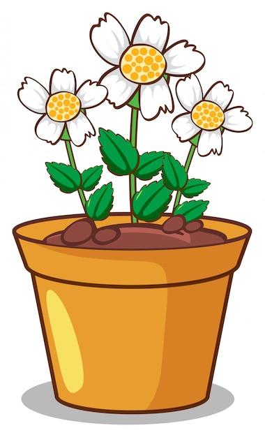 Witte bloemen op wit Gratis Vector