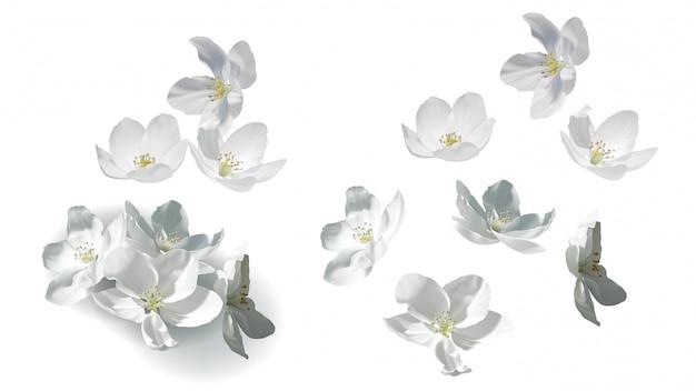 Witte jasmijnbloemen vliegen, vallen en in hoop Gratis Vector