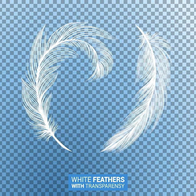 Witte pluizige veren realistisch transparant effect Gratis Vector