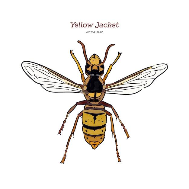 Yellowjacket gaat over een soort wesp. hand tekenen schets vector. Premium Vector