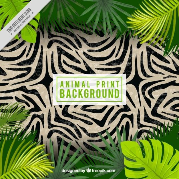 Zebra huid met palmbladeren achtergrond Gratis Vector