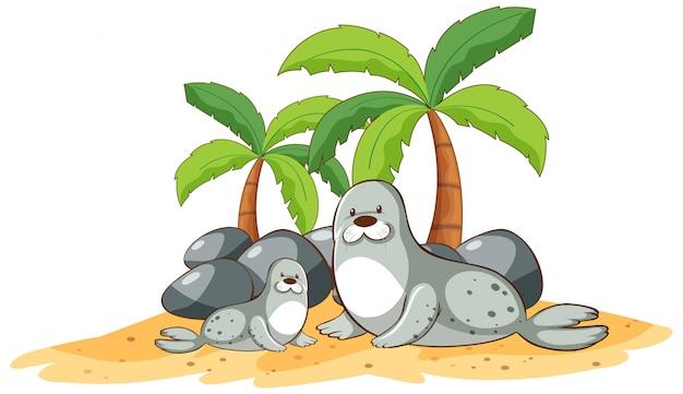 Zeehonden op het strand op een witte achtergrond Gratis Vector