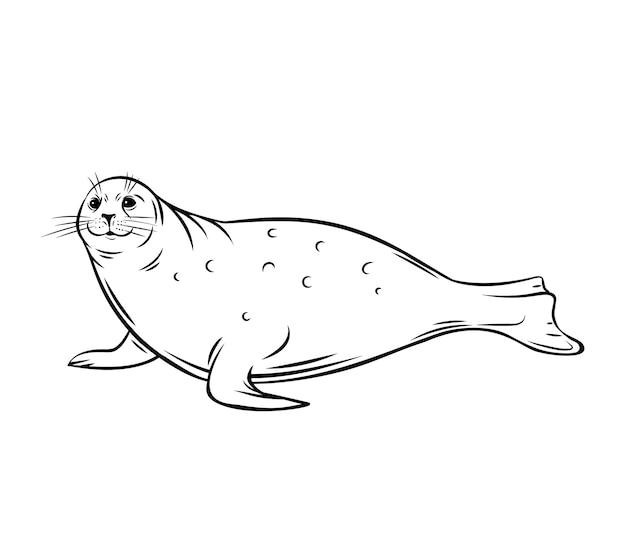Zeekalf. zegel dier overzicht pictogram. polar pinniped zoogdier, illustratie. Premium Vector