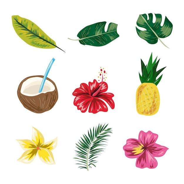 Zomer tropische blad, ananas, bloem, kokosnoot zomer elementen vector. Premium Vector