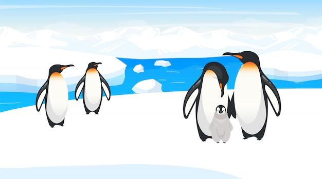 Zuidpool wildlife illustratie. keizerspinguïns broeden op sneeuwheuvel. kolonie van vogelsoorten in natuurlijke habitats. sneeuw wildernis. ijsland-omgeving. dierlijke stripfiguren Premium Vector