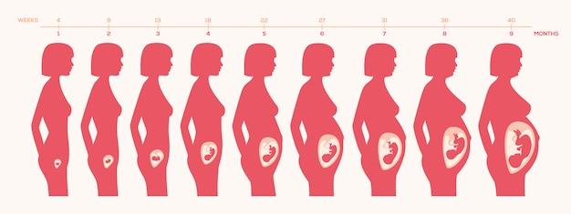 Zwangerschap procesontwerp Gratis Vector