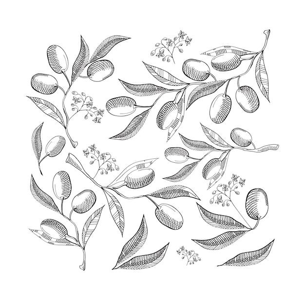 Zwart-wit naadloze patroon met abstracte olijfbladeren en bessen op wit Gratis Vector