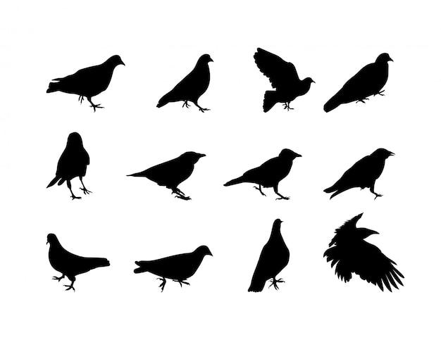 Zwart-wit silhouet duif kraai. illustratie Premium Vector